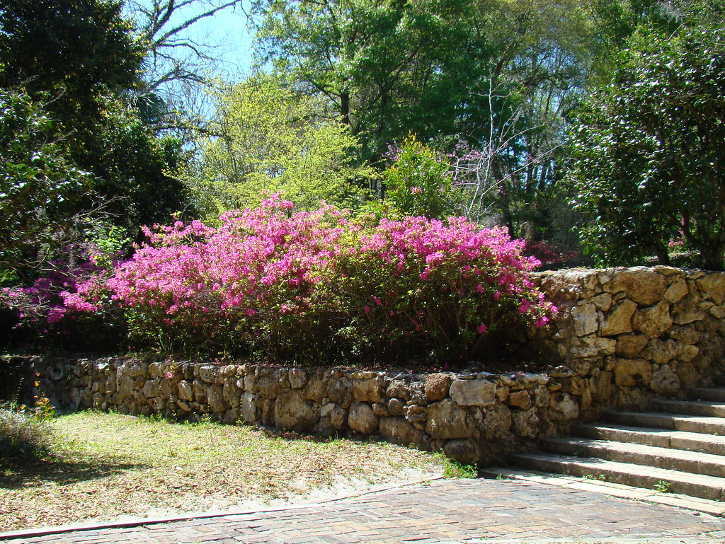 Tour Of Ravine Gardens State Park Palatka Florida Flickr