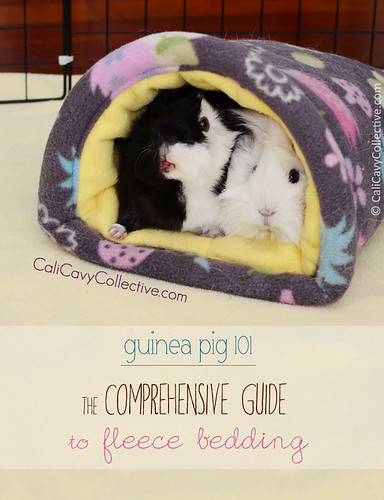 Guinea Pig 101: Comprehensive Guide to Fleece Bedding