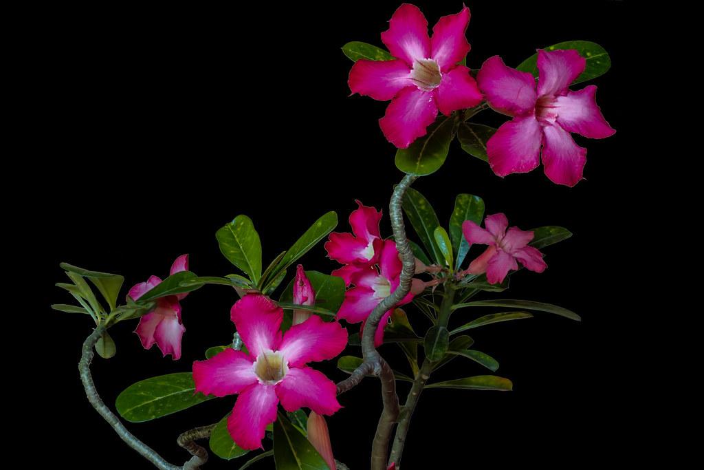 Simple Flower Garden