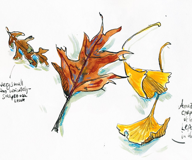 Sketchbook #102: December Leaves