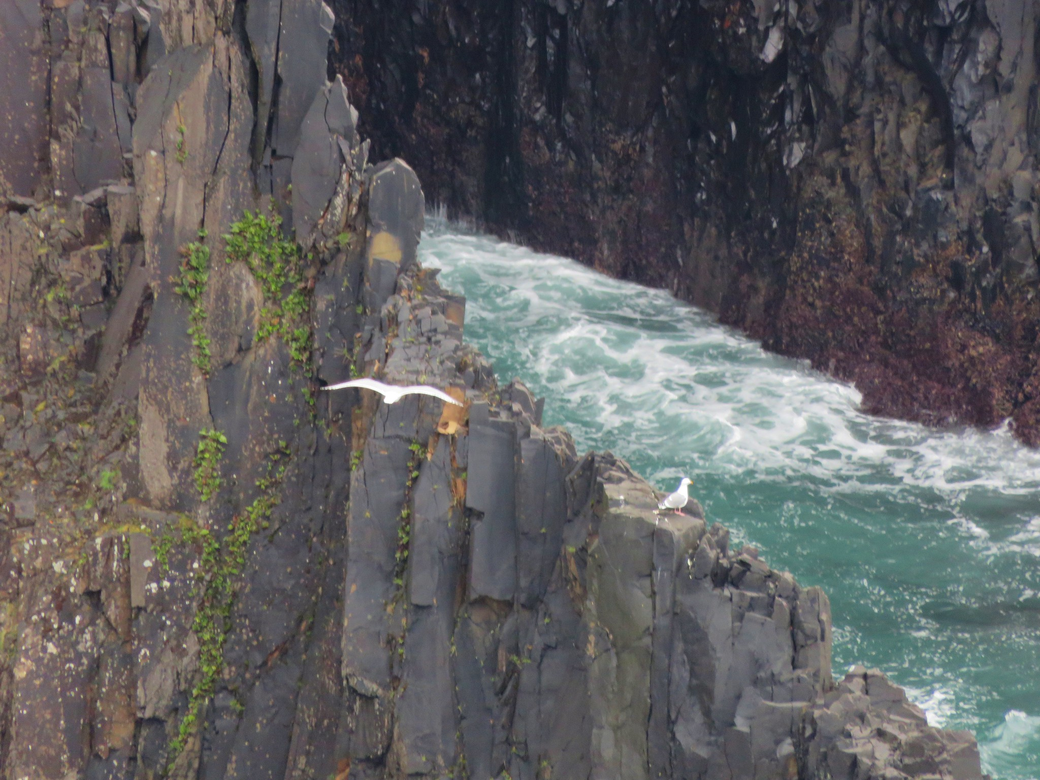 Seagulls near the sea caves