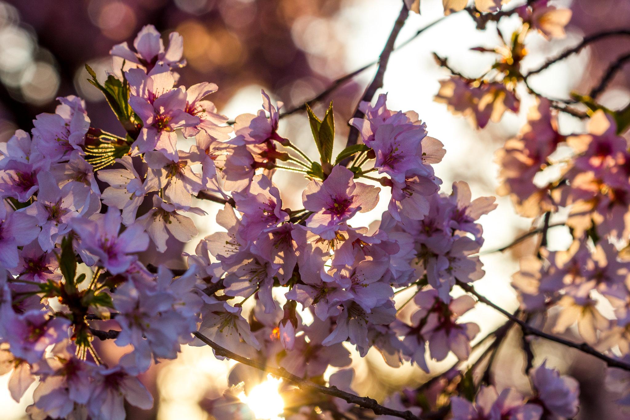 Sunny blossom