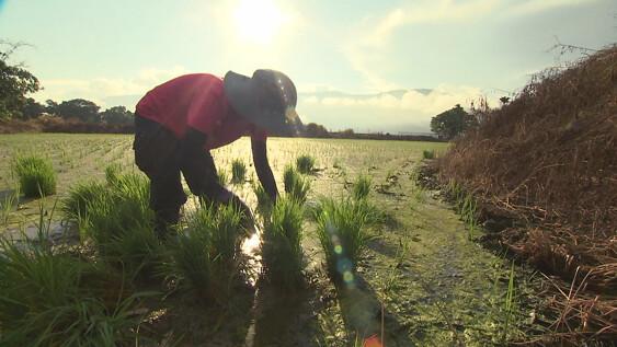 這些年輕人的生命中,務農不只是職業,而是一種人與自然永續共存的摸索與實踐。