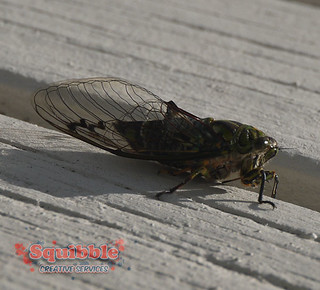 Cicada in the Autumn Sunshine