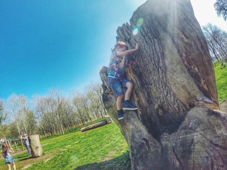 Climbing at Kingston Lacy