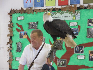 A visit from a Golden Eagle | by Hawkhurst CEP School Web Site Photos