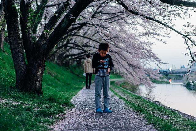 CherryBlossom_02