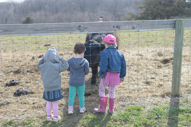 galewoods farm-15