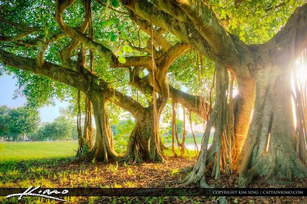 Banyan West Palm Beach