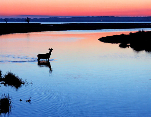Photo of deer at sunset taken by Paul Kane