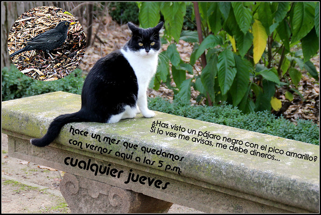 Un gato del jard n bot nico de madrid en enero flickr for Caracteristicas de un jardin botanico