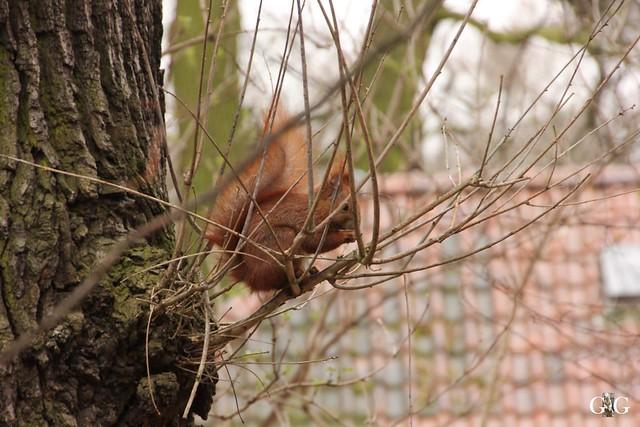 Tierpark Friedrichsfelde 19.03.201725