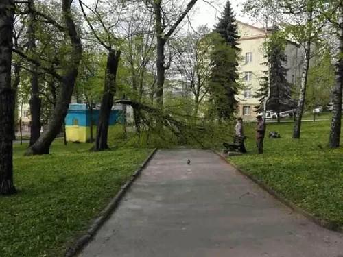 Доки дерево не впаде…