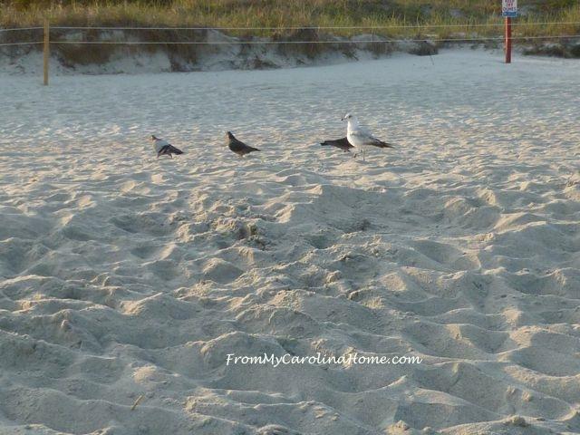 Myrtle Beach ~ FromMyCarolinaHome.com
