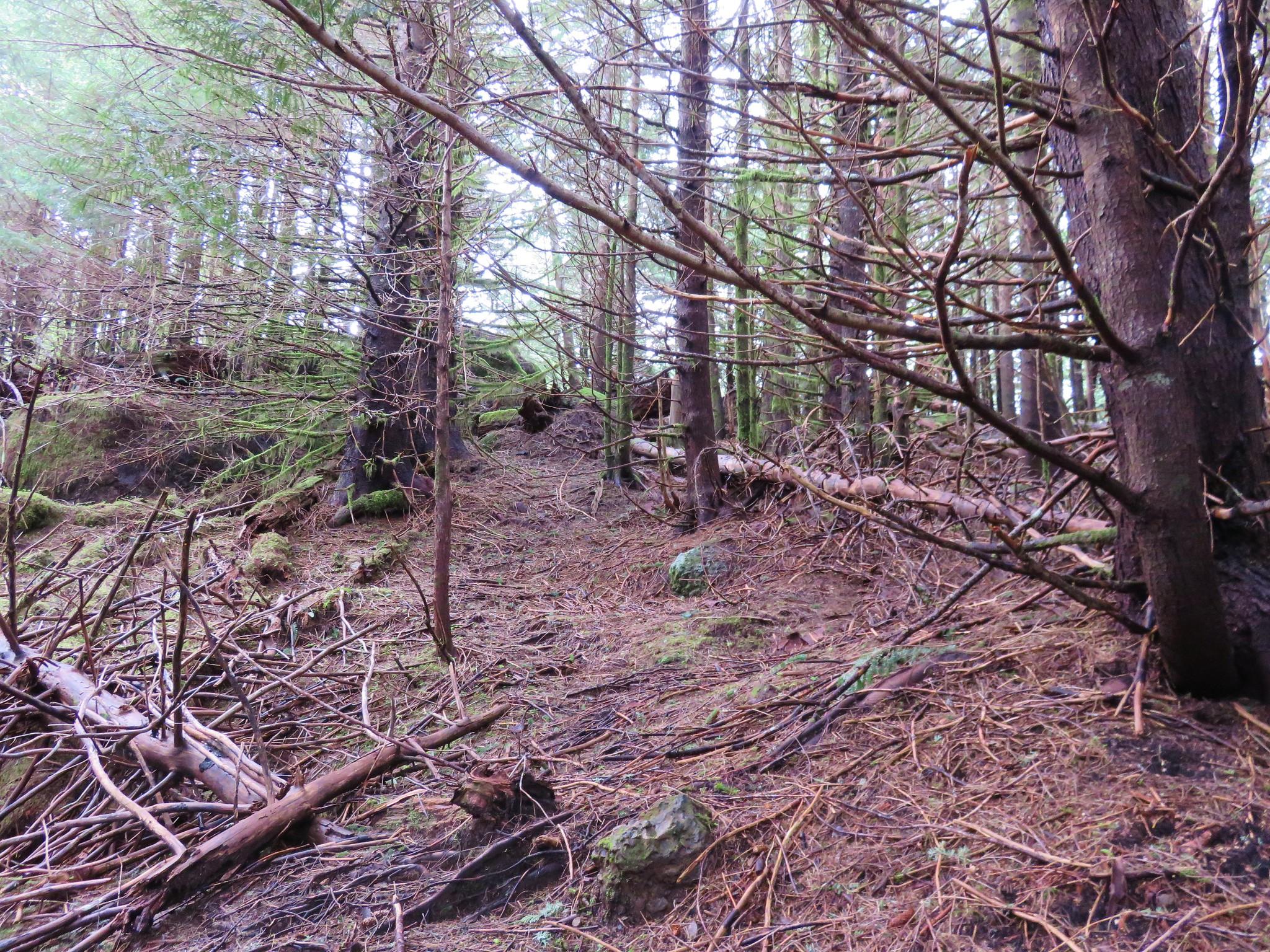 Forest on Angora Peak
