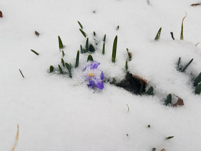 snow_flowers2