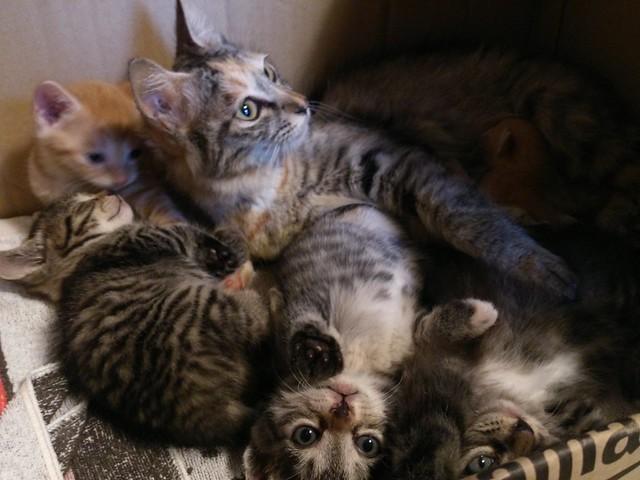 保護した野良猫たちへの支援のお願い