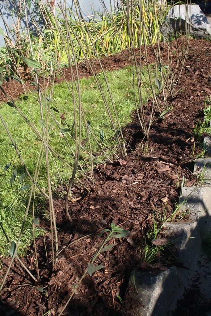 liguster hecke pflanzen pflanzen einer ligusterhecke als s flickr. Black Bedroom Furniture Sets. Home Design Ideas