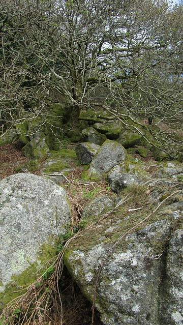 Whitehill Tor lower outcrop