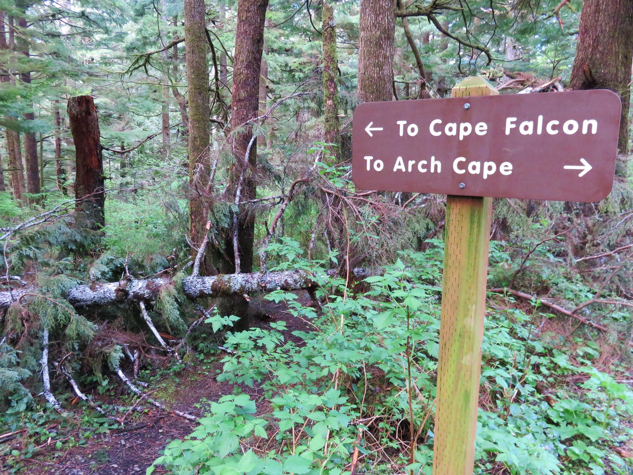 Oregon Coast Trail at Cape Falcon Road