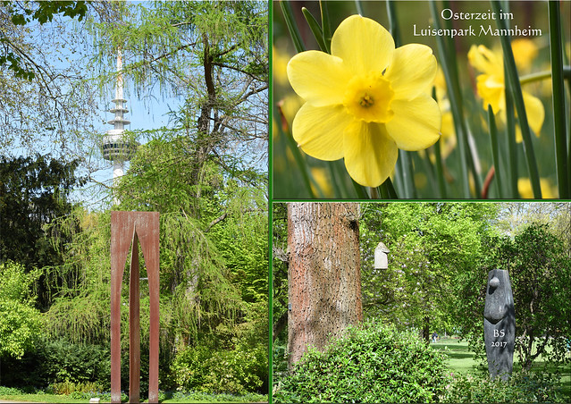April 2017 ... Ostern ... blühender Luisenpark Mannheim ... Foto: Brigitte Stolle