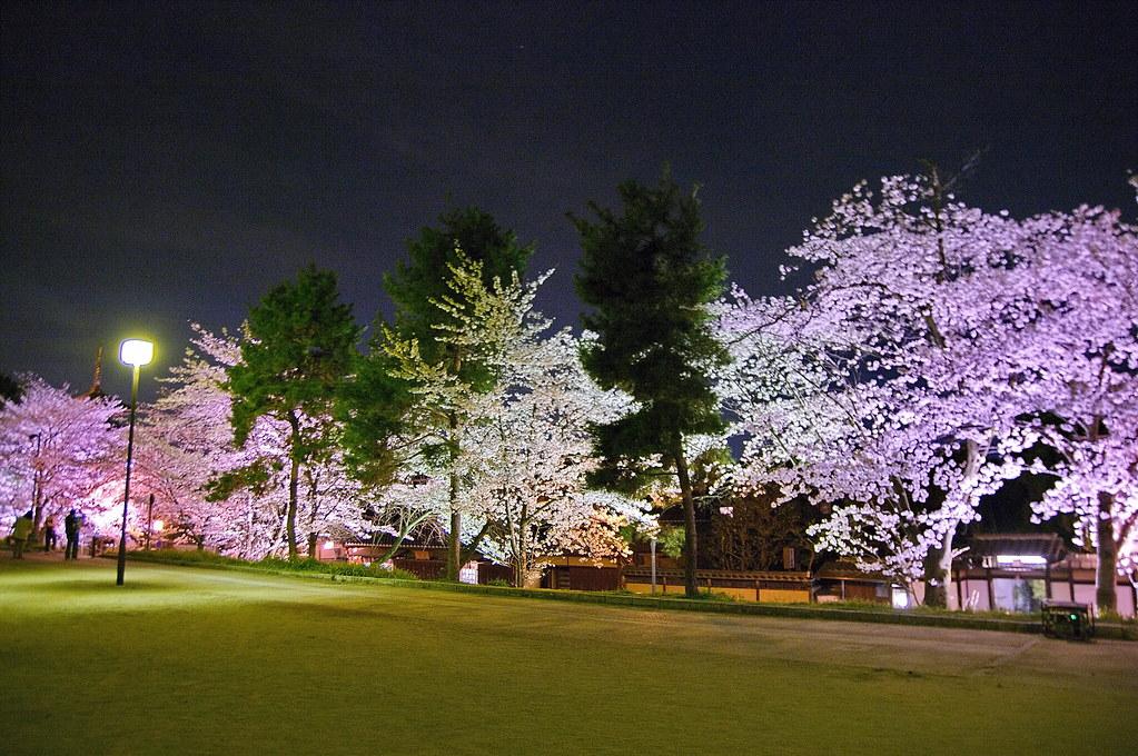 京都でおすすめの桜スポット