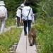 boardwalk monkey