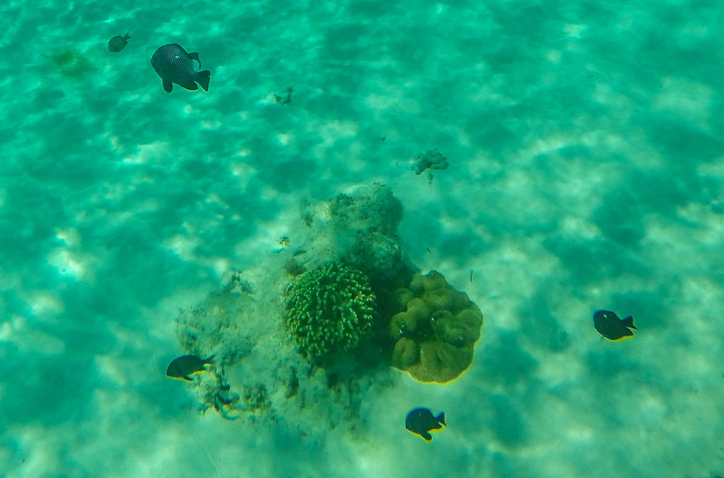 Camiguin Island - Day 3 - 2015 (12)