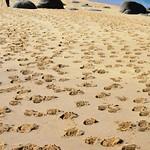 176.- Acivro en la Playa Castiñeira_1380x914