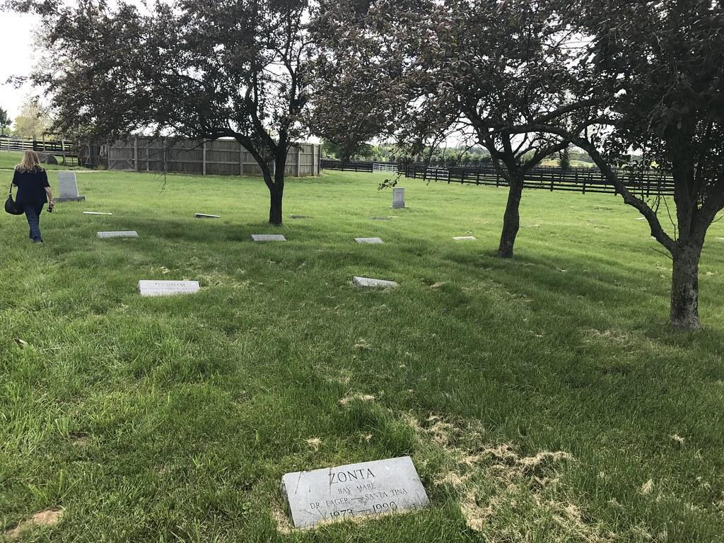 Horse Graveyard