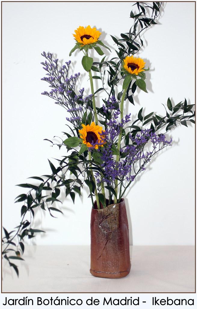 Jard n bot nico de madrid ikebana jard n bot nico de for Jardin botanico de liubliana