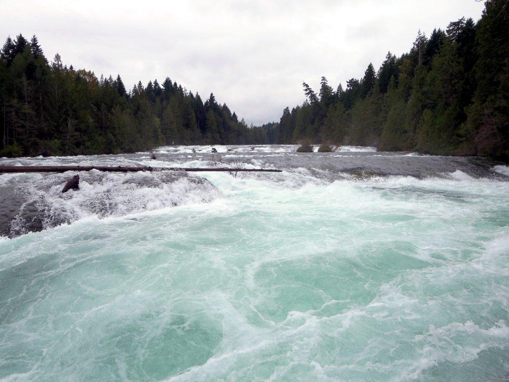 Image result for puntledge river