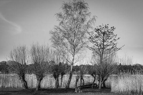 Bäume am Fluss / trees at the riverside | by k-w-a