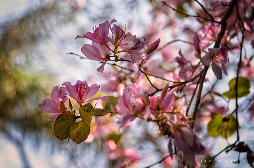 Street flowers spring time hazem hafez flickr spring time by hazem hafez street flowers spring time by hazem hafez mightylinksfo