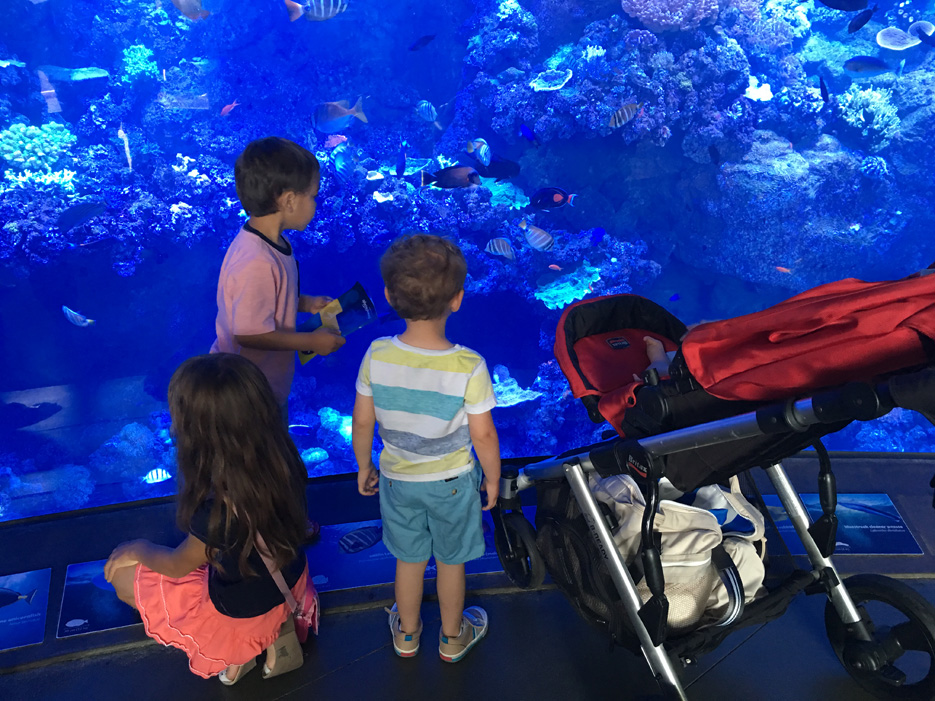 060516_aquarium03