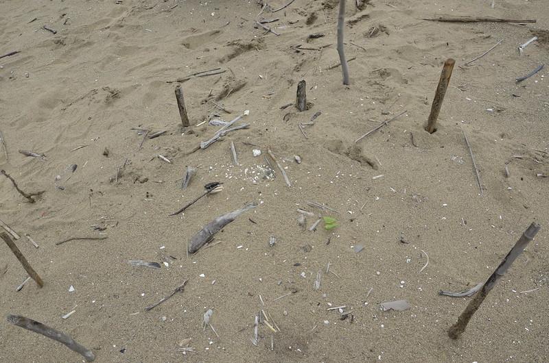 20170415@新北市萬里區下社沙灘 此為遠景,有發現鳥蛋嗎?