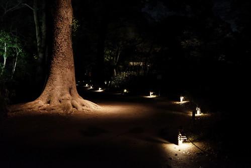 大名庭園ライトアップ 05