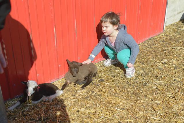 galewoods farm-13
