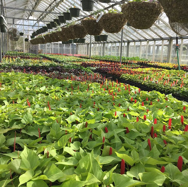 Annuals greenhouse.