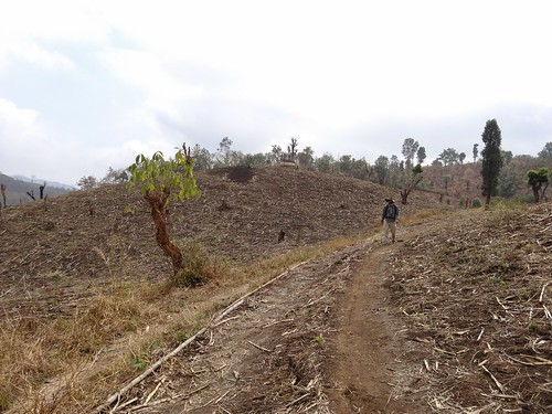 Dry cornfield