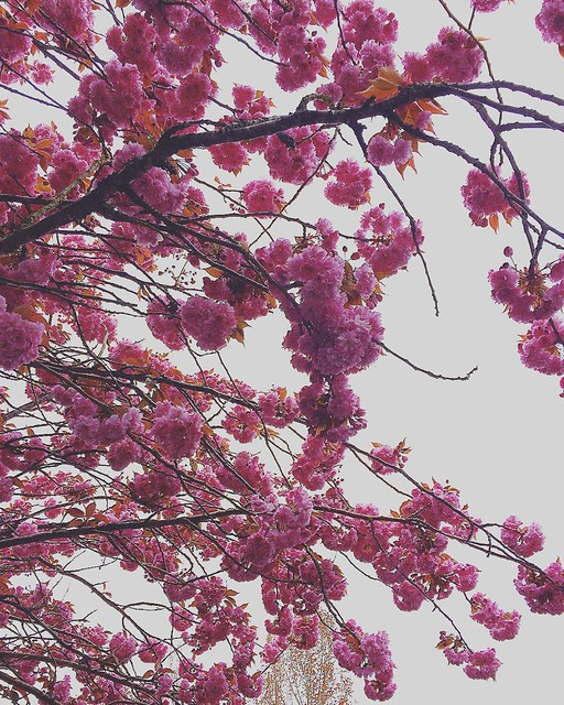 Look up! 🌸🌸🌸