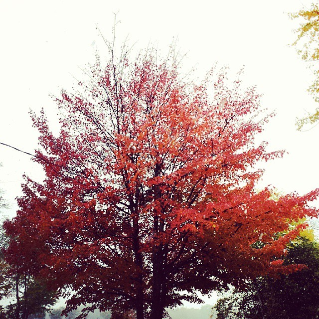 Image Result For Fall Tree And