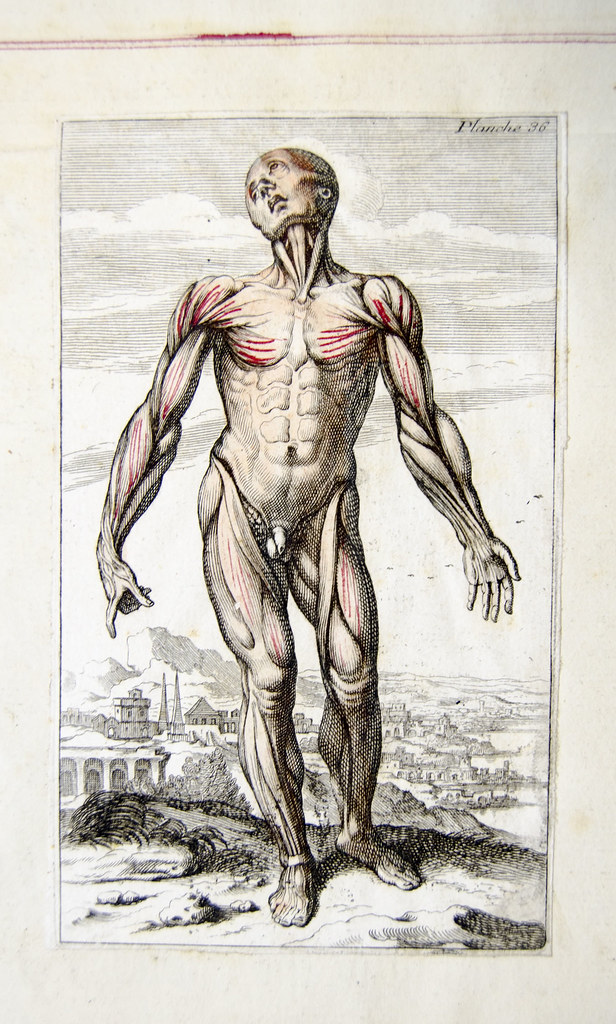 Muscles In French Anatomical Engraving Engraved Plate Show Flickr