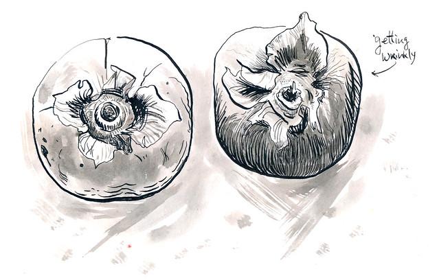 Sketchbook #102: December Persimmons