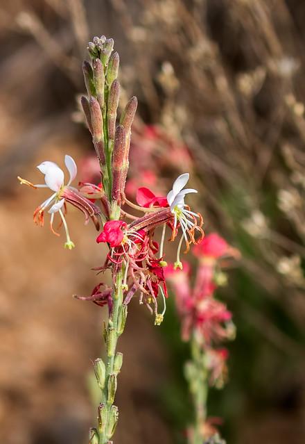 Wild-Flower-21-7D2-040817