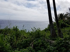 ocean-jungle