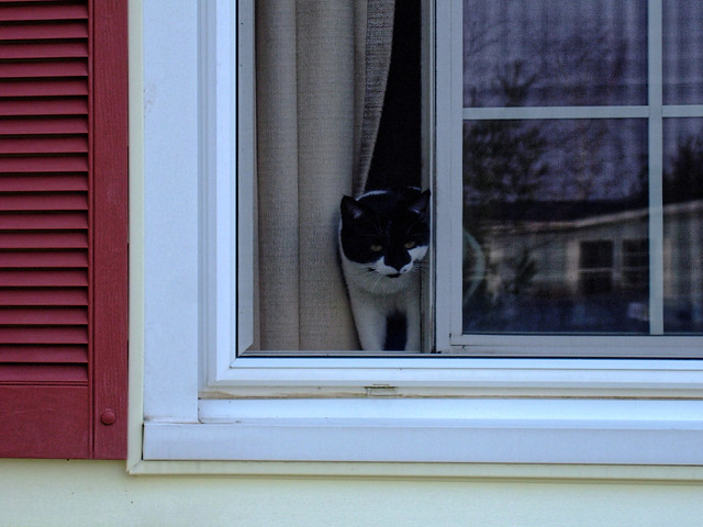 Oreo in the Window