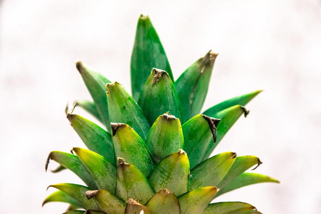 18 June 2013 Pineapple Leaves It Was Getting Late