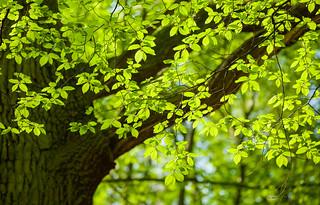 Spring Greens!
