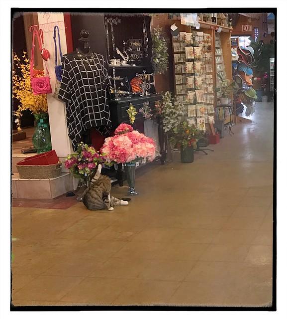Gift shop cat. 🐈